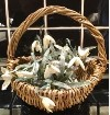 Gypsy Basket