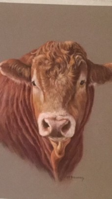 cow pastel drawing