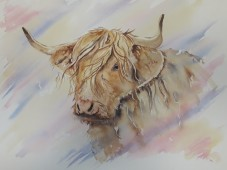 watercolour highland cow
