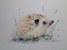 watercolour hedgen=hog